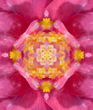 camellia_kaleidoscope.jpg